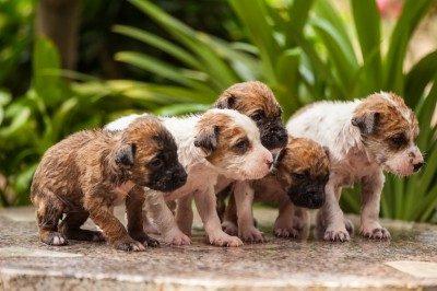 Close Up Of Washing Five Puppy Dog
