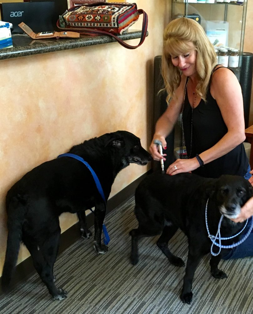 Chiropractor Dr. Michelle Zarzana restores mobility and comfort to my dogs.