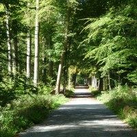 """Guest Blog Post: """"Walking in the Forest is Good for My Soul,"""" in Denzil Walton's exact words"""