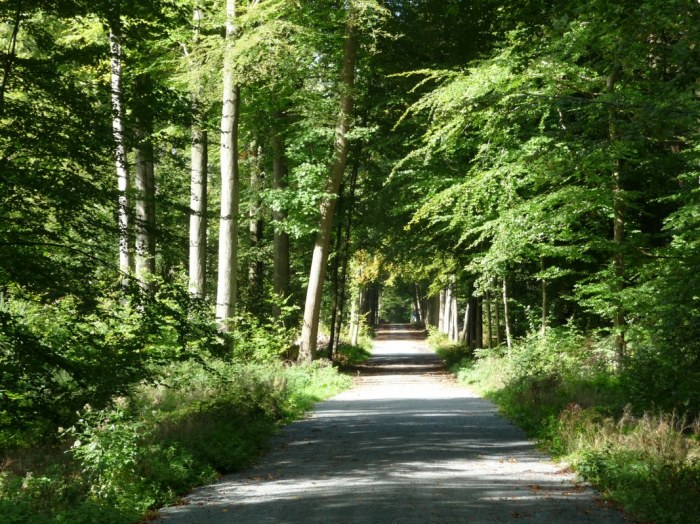 A lush forest road