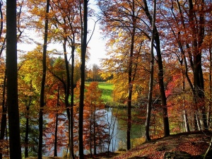 autumn view of tree lined lake
