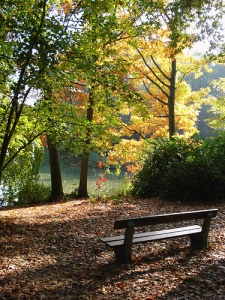 gorgeous forest view from park bench