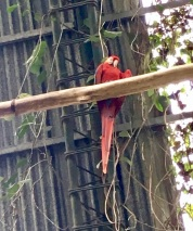 A red macaw oversees a butterfly sanctuary.