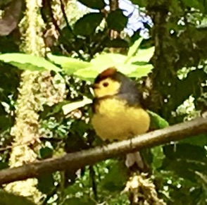 These puffy little yellow birds were everywhere.