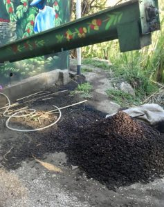 Coffee remains get composted