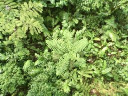 A fern tree from above.