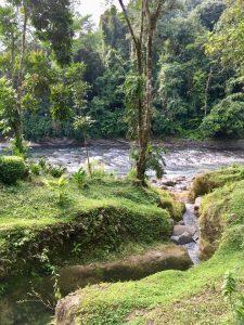 Pacuare River scene.