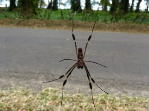 Costa Rica is heaven for more critters than most anywhere, including fuzzy kneed big insects on the side of the road.