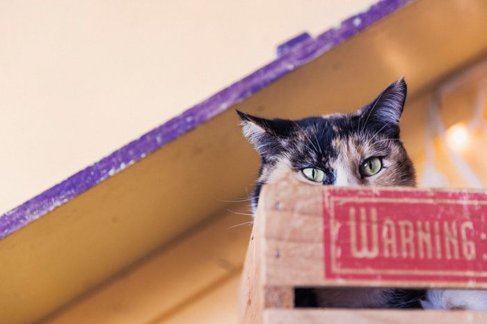 Photo of green eyed cat in box that says 'warning'