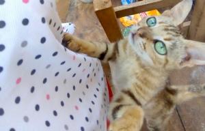 Green Eyed Cat by Abigail Padi