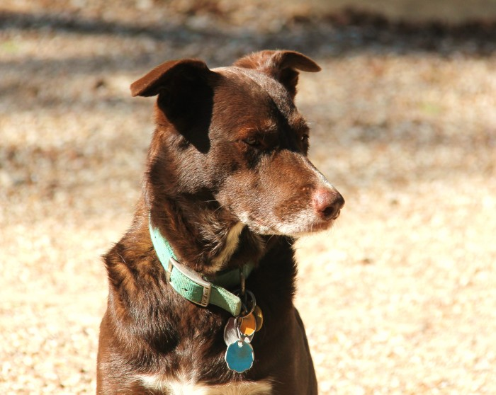 Dog Puppy 037