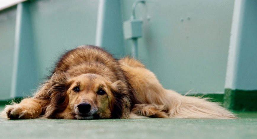 """Guest Blog Post: """"3 Ways to Keep Your Dog Healthy,"""" in Ryan"""