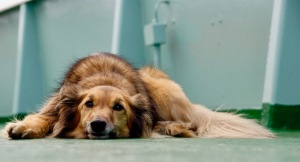 photo of forlorn dog