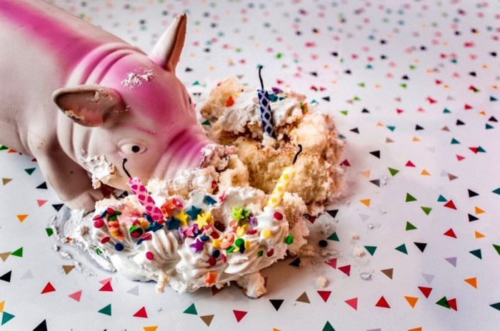 Photo of toy pig pigging out in a colorful cupcake