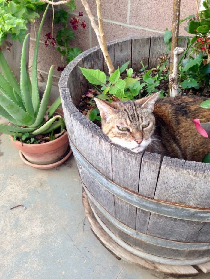 Photo of tabby cat lying among plants and flowers