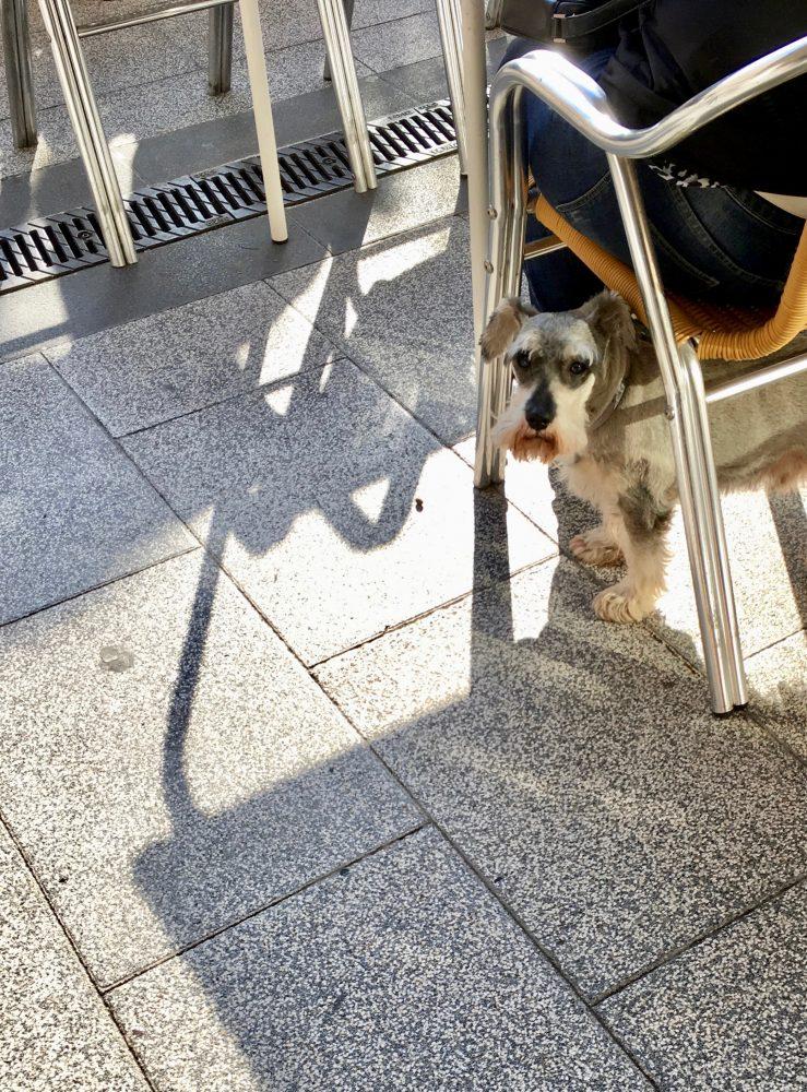 A dog under a chair.