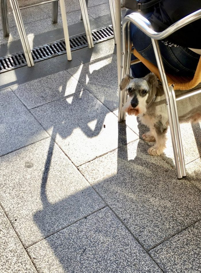 A dog under a chair.