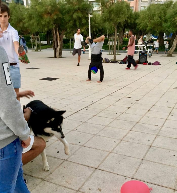 dogs and street performers at the park