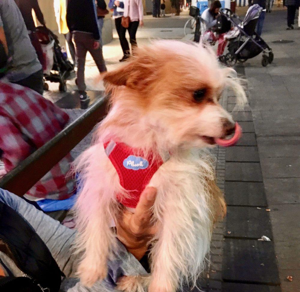 A fluffy dog