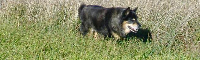 Photo of Chuy dog