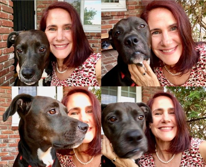 4 headshot photos of da-AL with her labrador pit bull mix dog