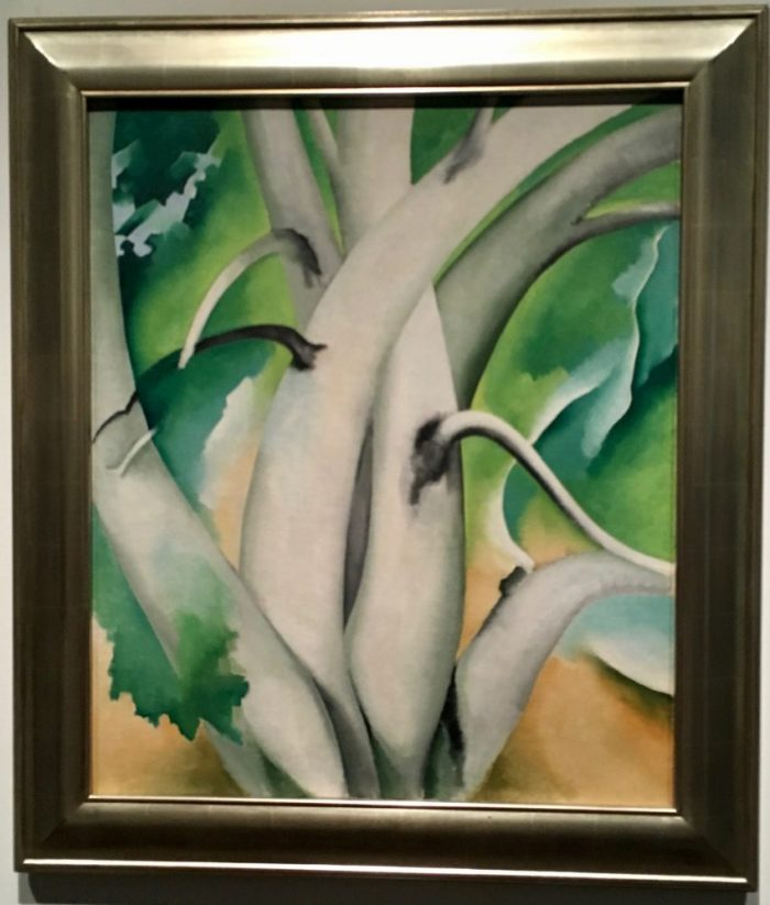 White Birch -- Lake George, 1925-26, by Georgia O'Keeffe