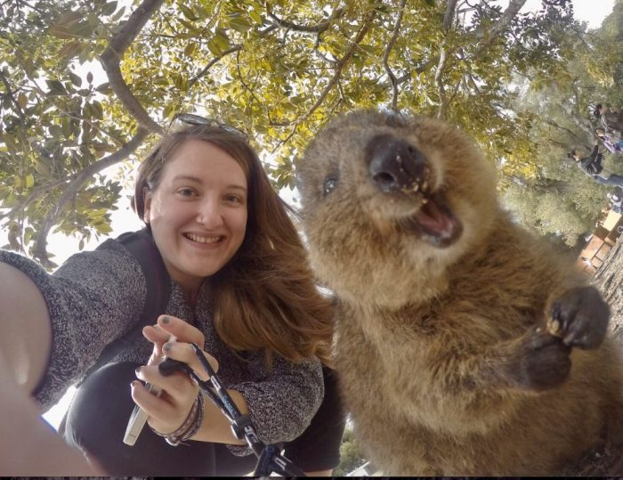 Katrina's travel buddy, Rachel, enjoys a selfie with a quokka.