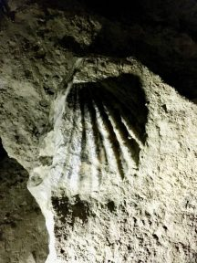 A shell fossil.