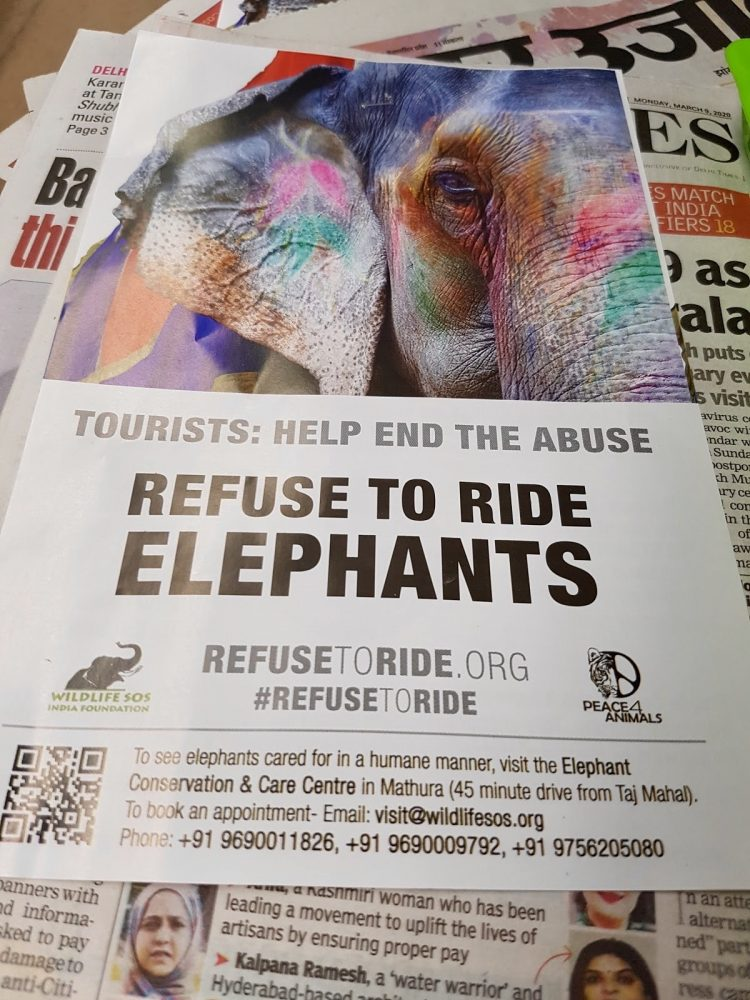 Refuse to Ride Elephants sign by Chelsea.