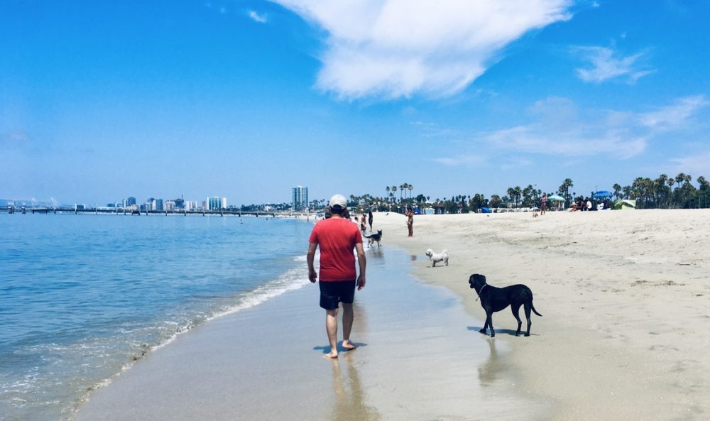 Khashayar and K-D dog stroll the beach.