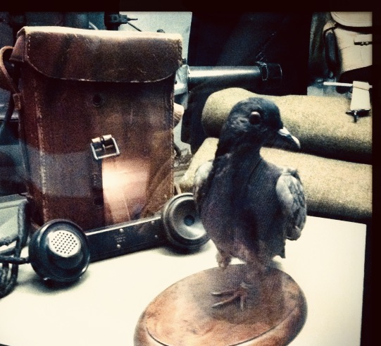 Cher Ami, WWI heroine, at the Smithsonian.