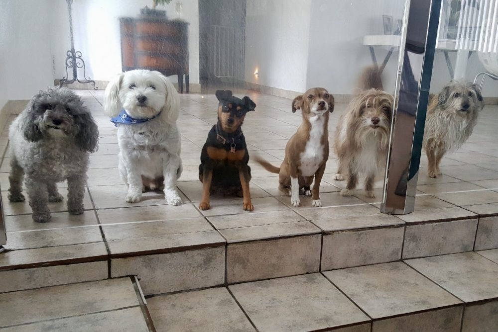 Cousin Ana's is heaven for needy little dogs! (L-R) Here's Tiky, Albert, Bella, Nike, Beethoven, Charlie. The last ones are brothers and sister.