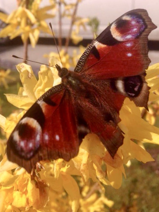 Photo of a butterfly by author Alice Renaud.