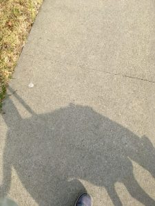 This photo of my dog's shadow is a bit of accidental art!