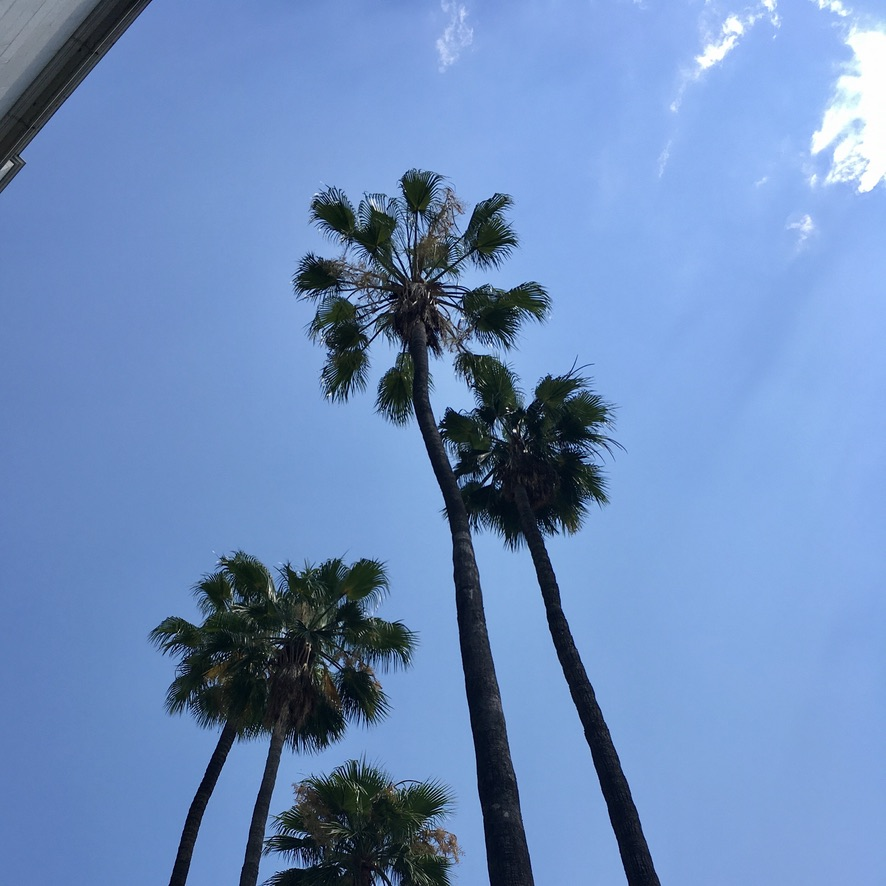 Almost every day in Los Angeles is sky perfection.